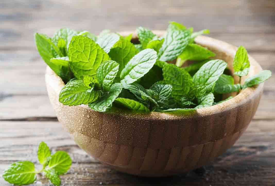 Pakistani home remedies for pimples by mint paste